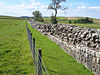 Hadrian's Wall at Birdoswald - geograph.org.uk - 552095.jpg
