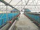 Biosecure KOI breeding and growing intensive facility in Israel.jpg