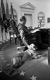 A man is shown from behind, seated in a leather chair at an ornate wooden desk in the Oval Office. His right hand is reaching to the floor to pet a large golden retriever lying at his feet.