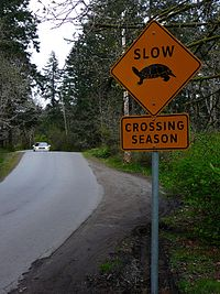 "An orange, diamond-shaped sign on the right side of a winding road way that says ""Slow: crossing season"" with a picture of a turtle."