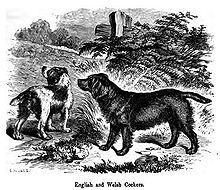 A drawing of two dogs in greyscale, one dark colored and the other is light with dark patches.