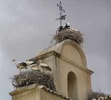 At least eight tall, black and white birds, in three nests on the roof of a building.