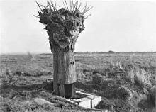A large stubby object resembling a tree trunk stands in a grassy field, devoid of leaves and branches. At the base is a door-like opening and some wooden form-work.