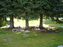 gravestones on the grass under three trees