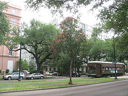 20080622 St. Charles St. Trolley behind tree with Mardi Gras beads.JPG