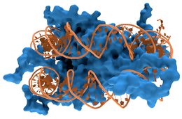Nucleosome1.png