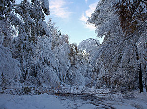 A snow-covered road with one small tree down across it, in early morning light. On either side are trees, many still in leaf, heavy and bent with snow.