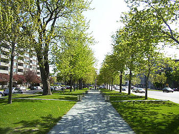 a long straight walk down the middle of a narrow park is bordered on both sides by trees and roads. At intervals along each side of the path, are series of waist-high boxes