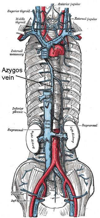 Radiologist Human: MMed Anatomy, Spotter
