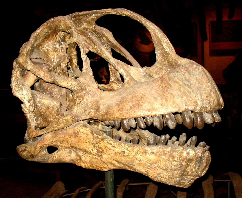 Зубы динозавров фото 3