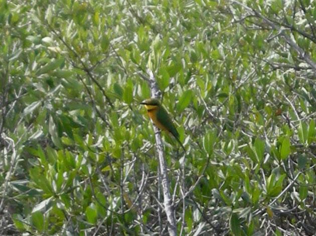 (PDF) The peacock Island: An account of Avifaunal species ...