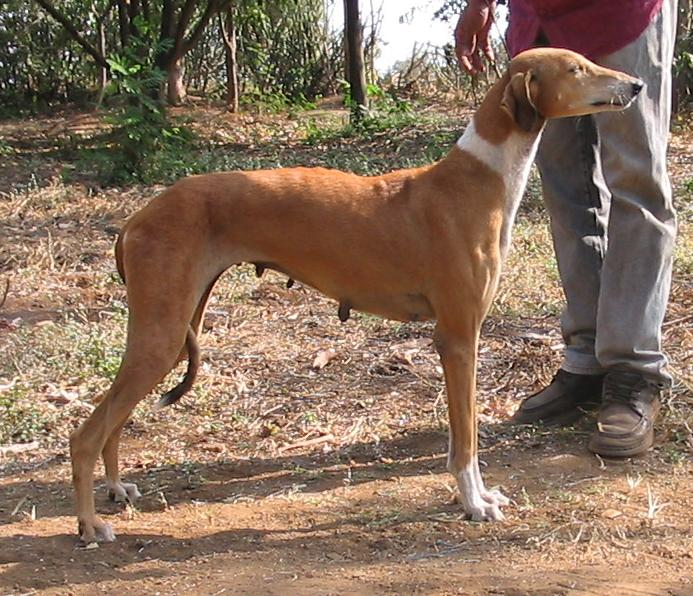 Dogs Variety Names In India