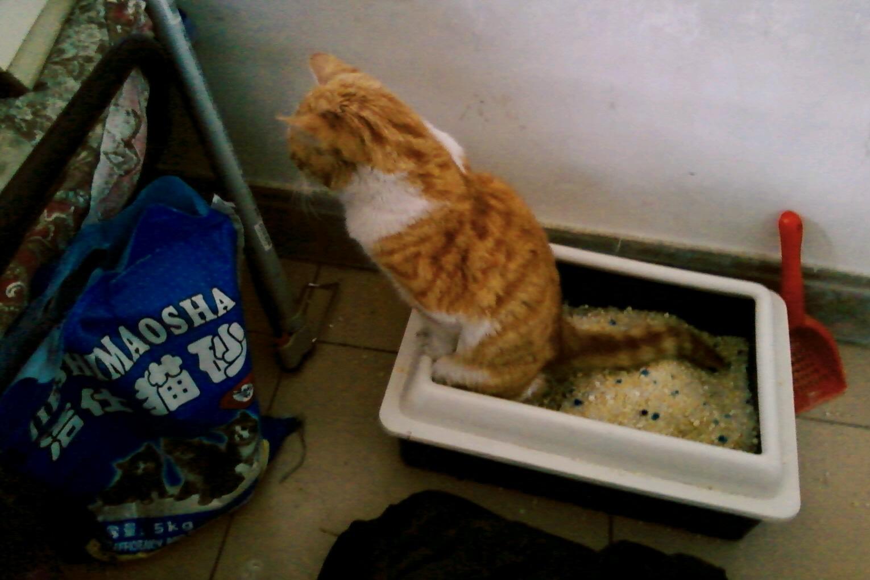 Using Silica Cat Litter To Absorb Moisture