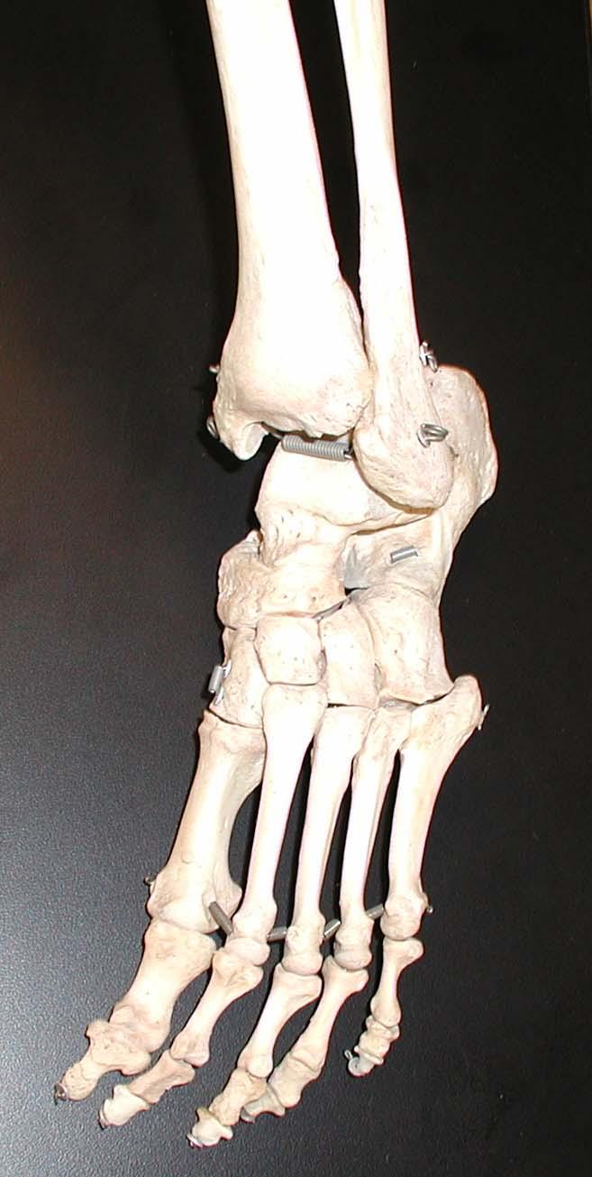 Из чего сделать кость своими руками фото