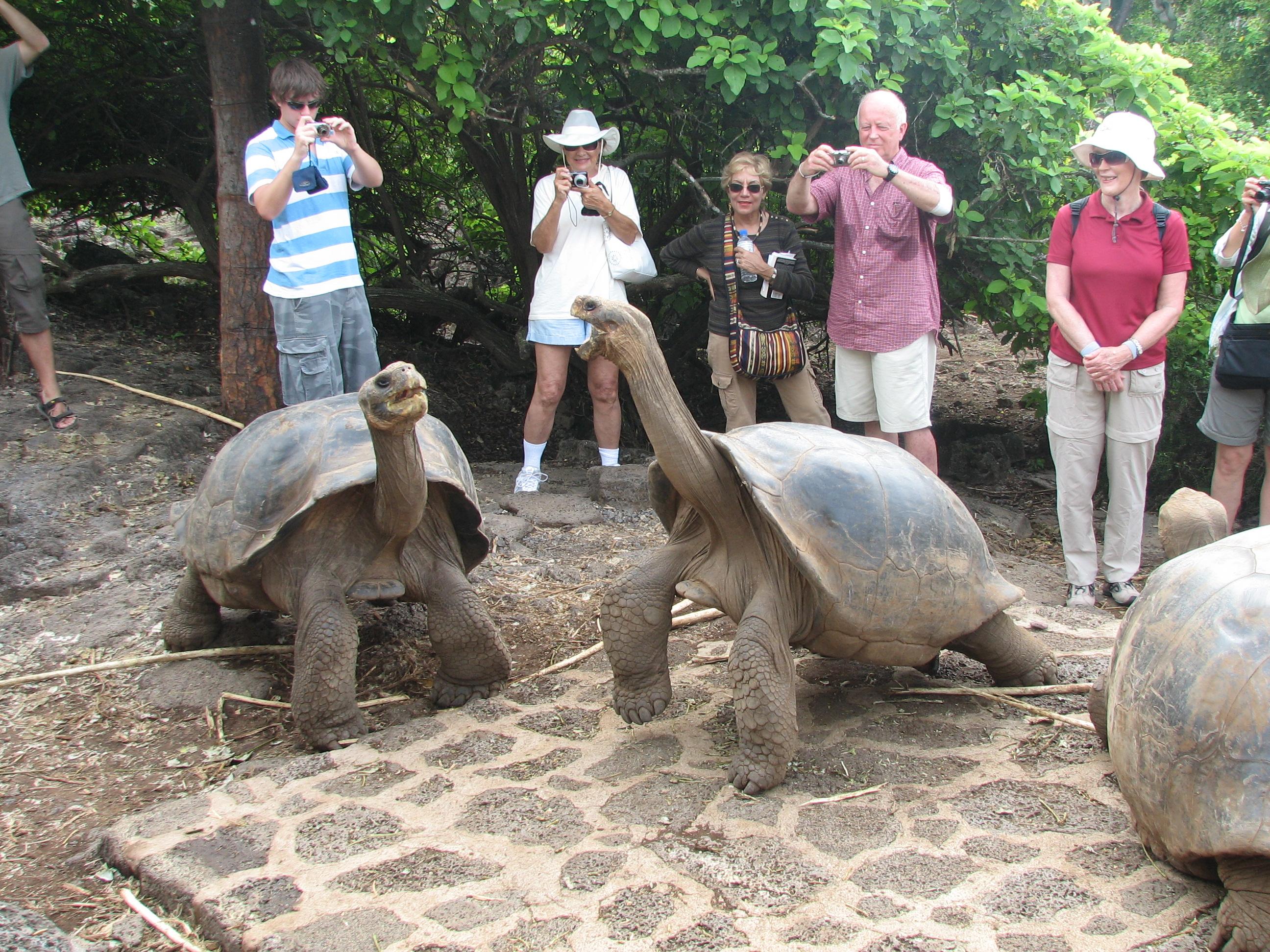 Galapagos Tortoises Habitat Gal Pagos Tortoise