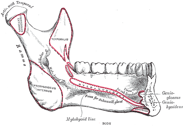 Jaw Fracture Shrink Support