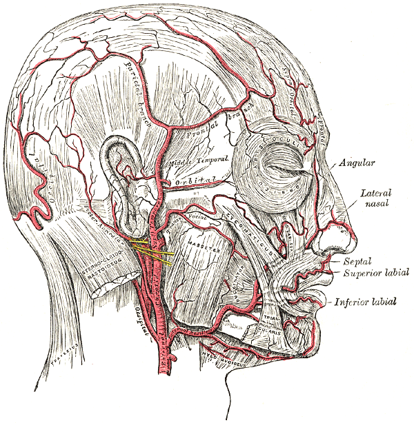Name = Temporal arteritis