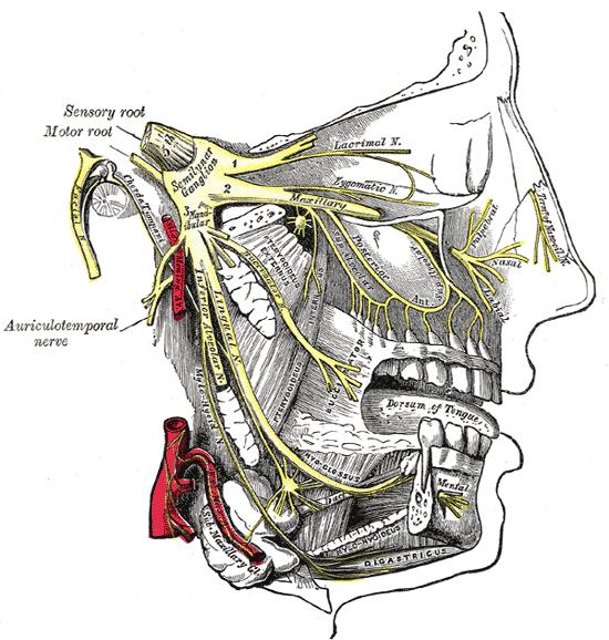 Trigeminal neuralgia. Infobox_Disease. Name = Trigeminal neuralgia