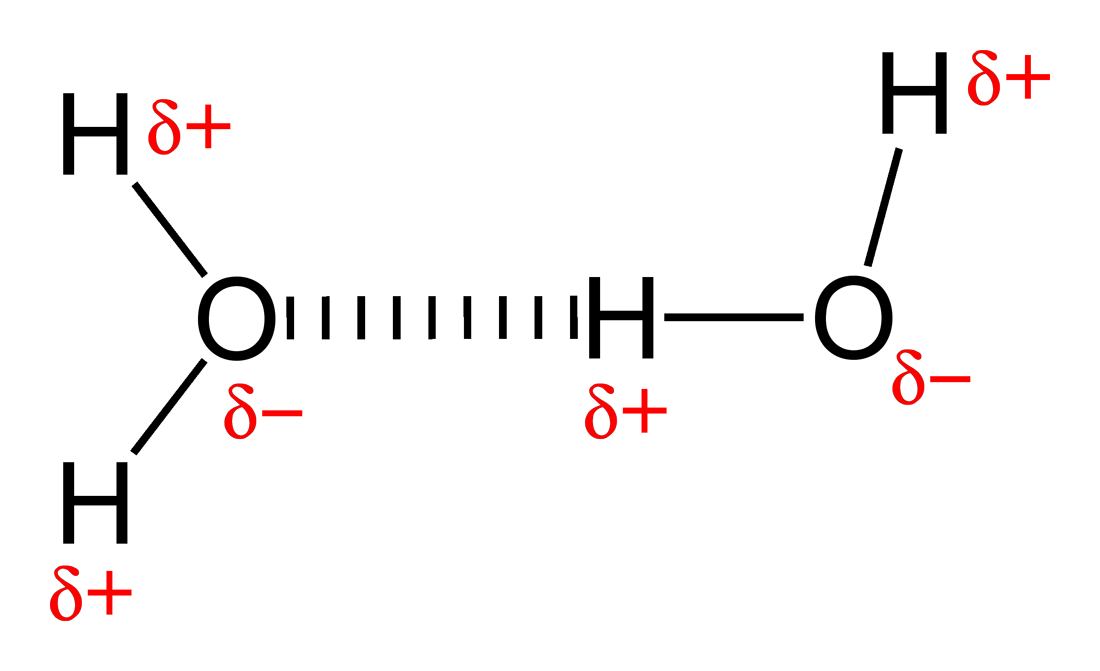 the role of h bonding in living The concentration of the hydrogen ion [h+] activity in a solution determines ph the role of h-bonding in living organisms  atoms are the basic unit of chemistry.