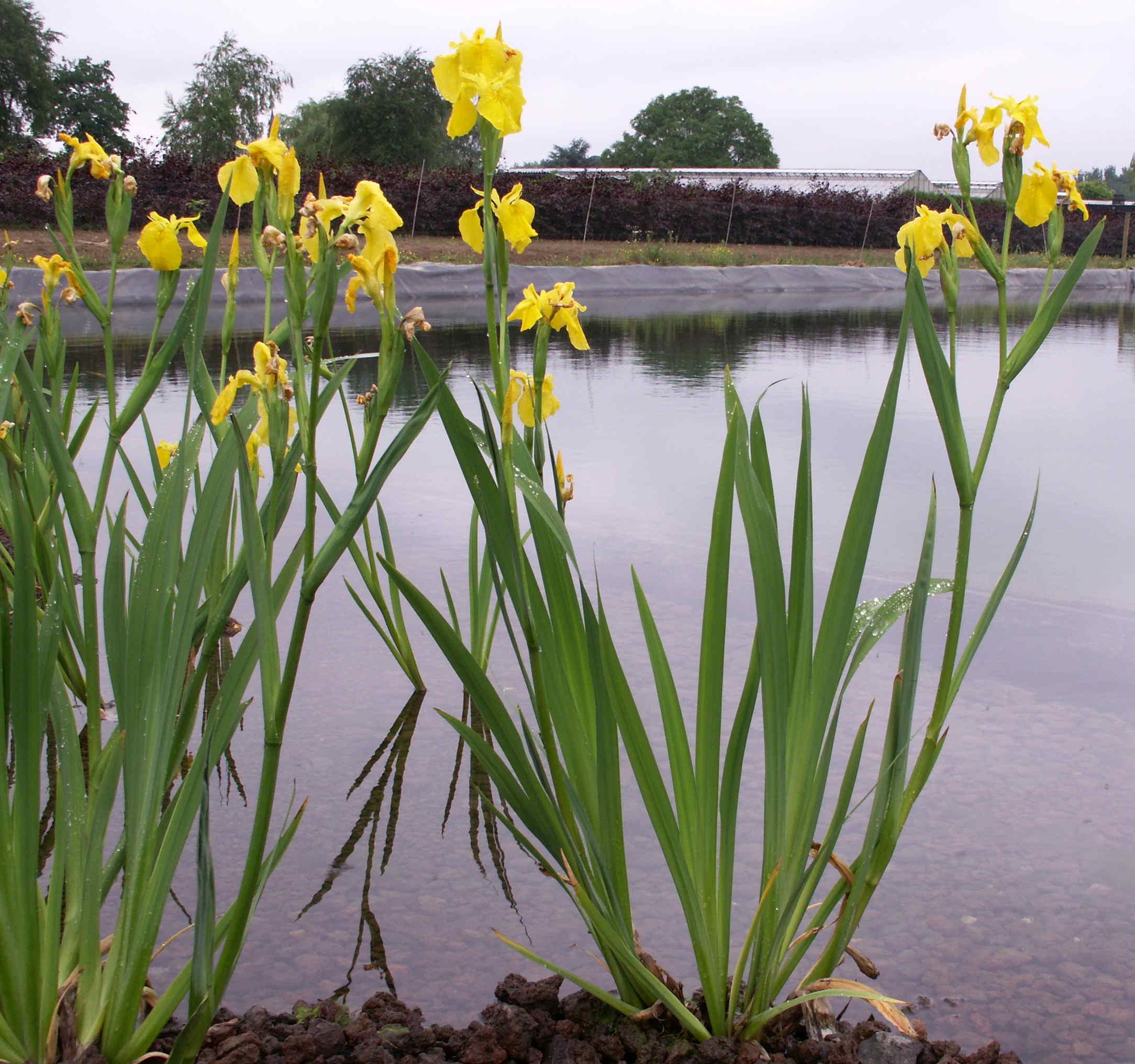 Древо баобаб фото видео где растет и как цветет