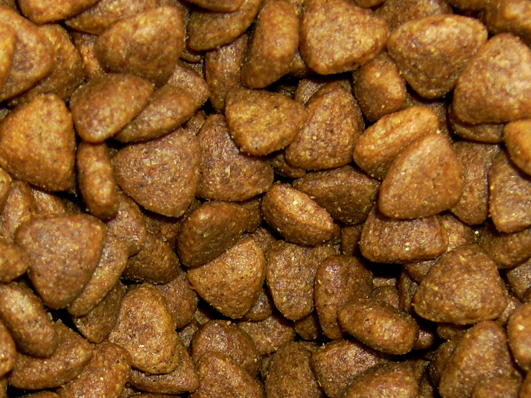 Best Store Bought Raw Cat Food