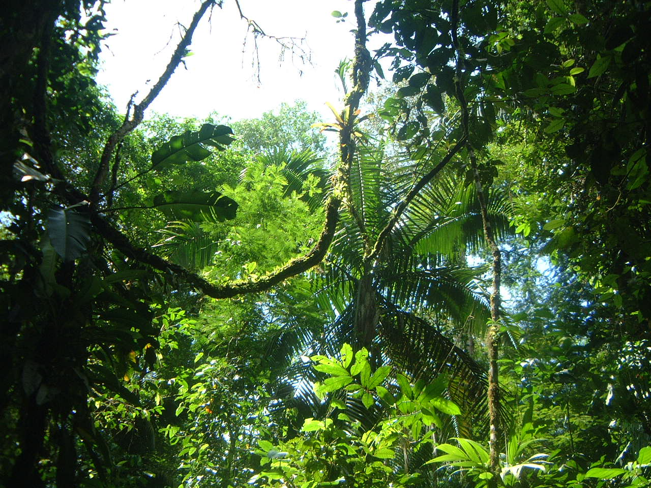 La Selva Biological Station