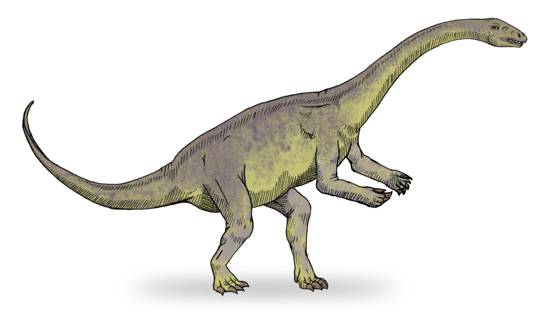 Lufengosaurus   Dinopedia   FANDOM powered by Wikia
