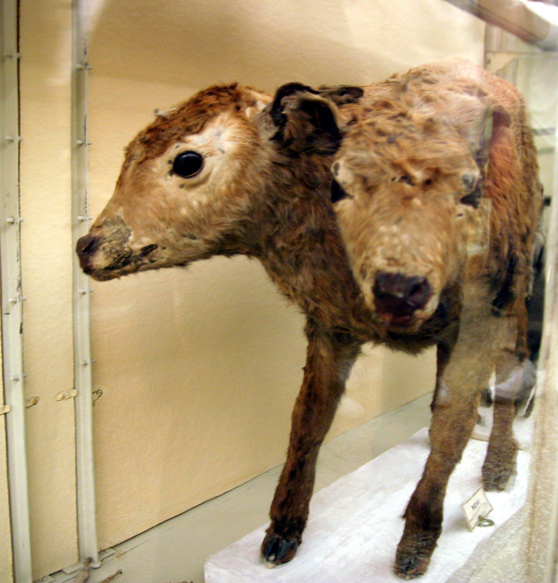 Human cattle nackt films