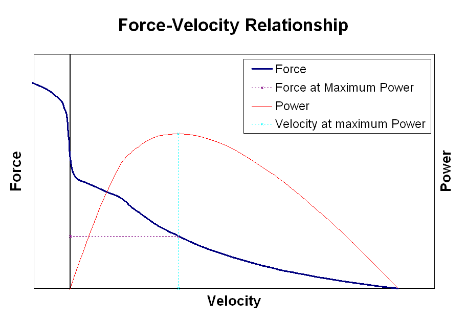 force velocity relationship concentric eccentric and isometric