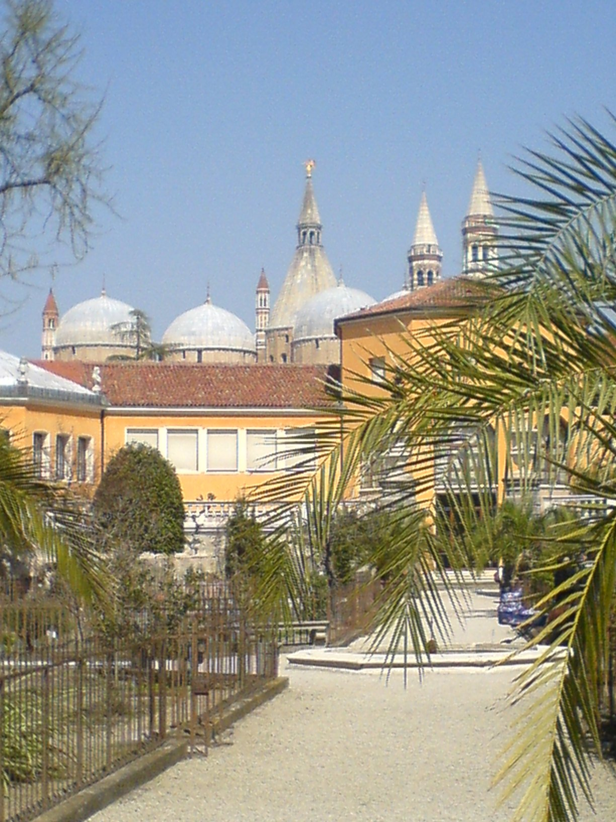 Padua Italy  city pictures gallery : The Botanical Garden of Padova today; in the background, the Basilica ...