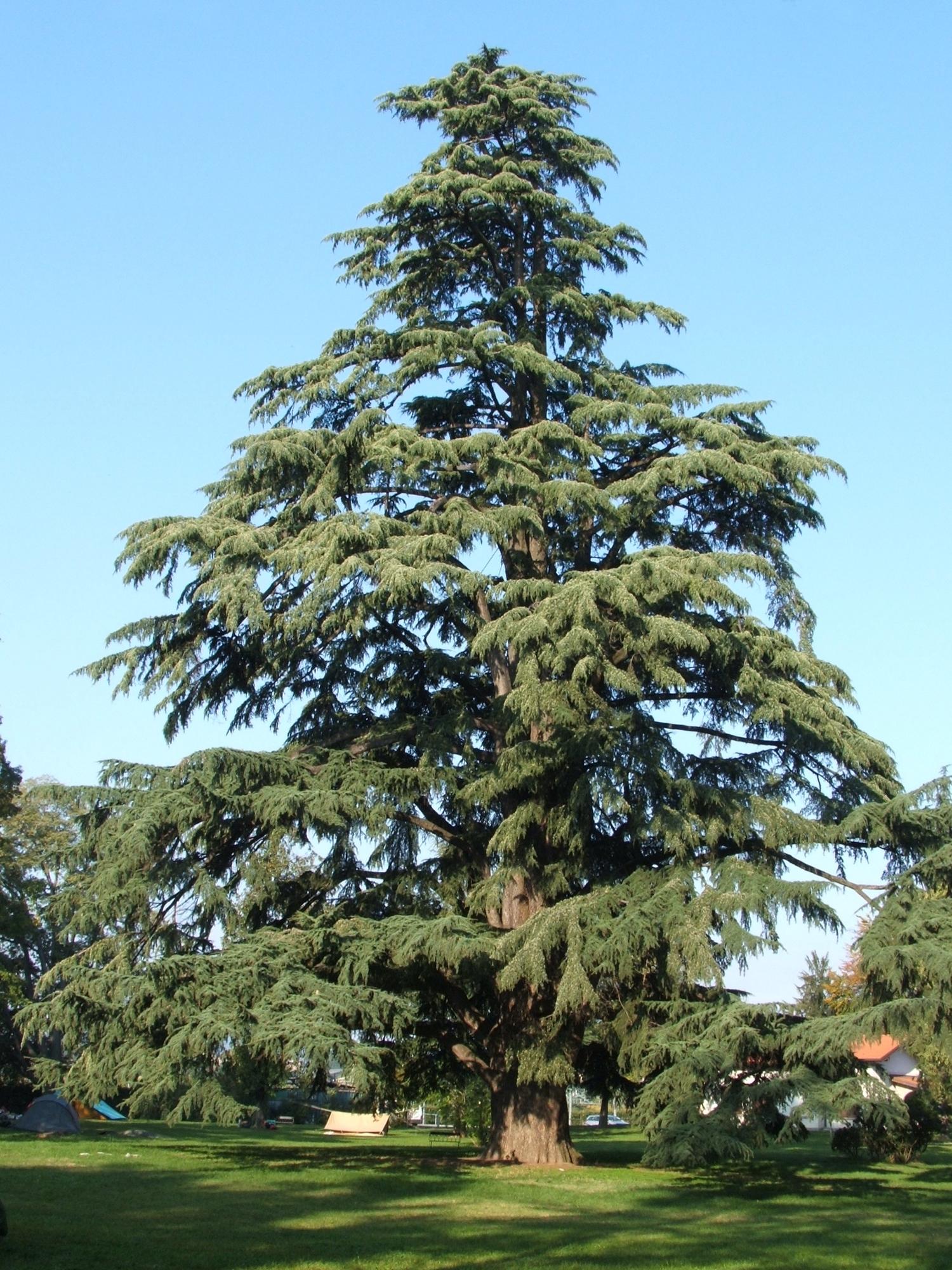 Фото дерев для дітей 17 фотография