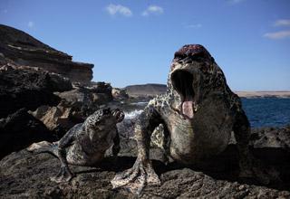 http://en.academic.ru/pictures/enwiki/80/Primeval_Mer-creature.jpg