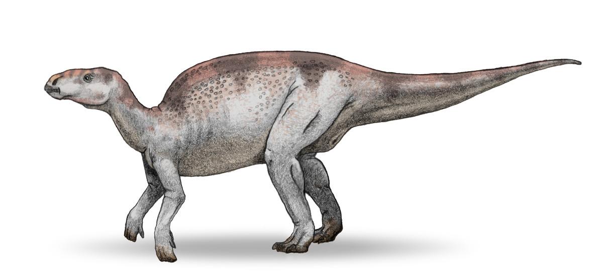 Probactrosaurus_v3.jpg