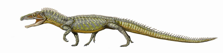 Proterosuchus fergusi ...