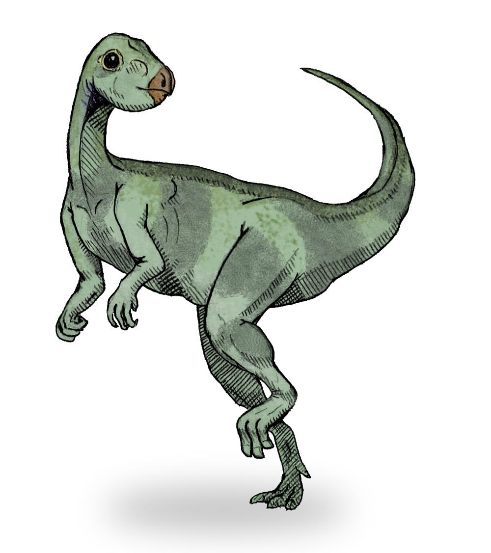 http://en.academic.ru/pictures/enwiki/81/Qantassaurus_sketch1.jpg
