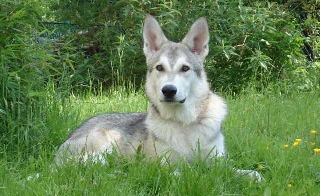 Dog Breeds - StarDestroyer.Net BBS