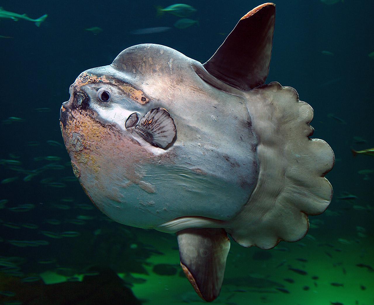 Удивительные рыбы фото 90.